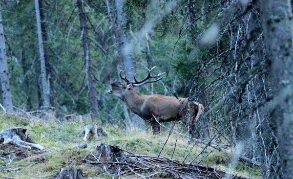 Sursă foto : www.alba24.ro
