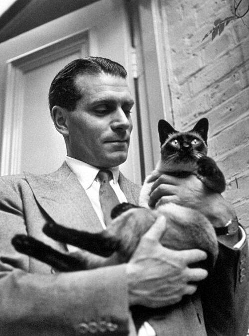 Mica Felină sau de ce iubim pisicile…
