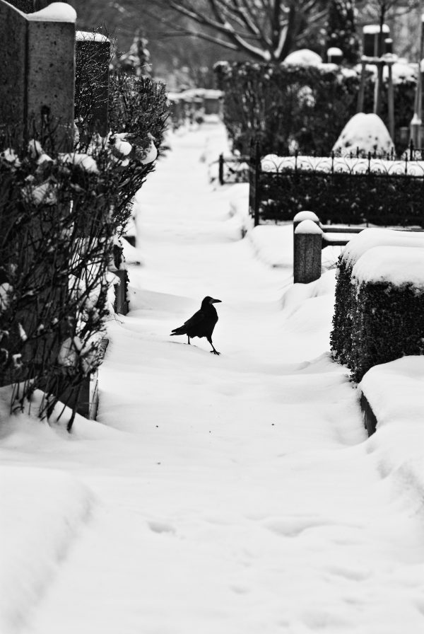 cimitir iarna