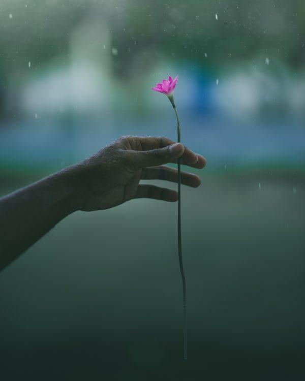 mână ploaie floare