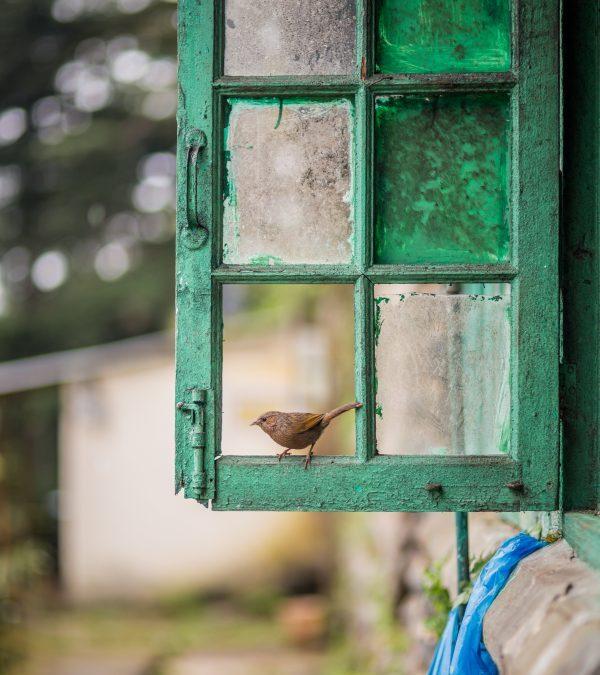 """Poemul zilei: """"Ca să pictezi o pasăre"""" – Jacques Prévert"""