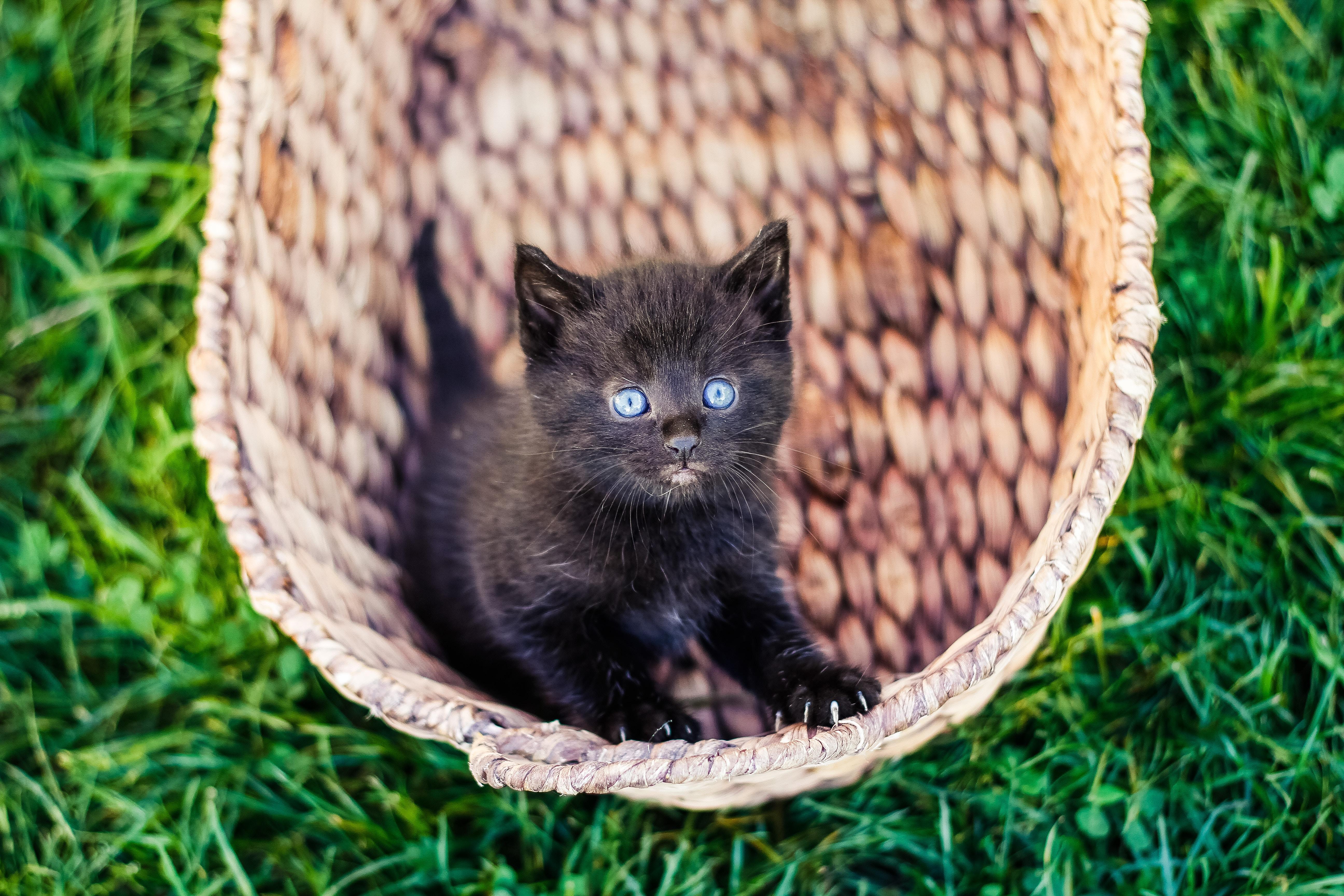 vedere pisică umană)