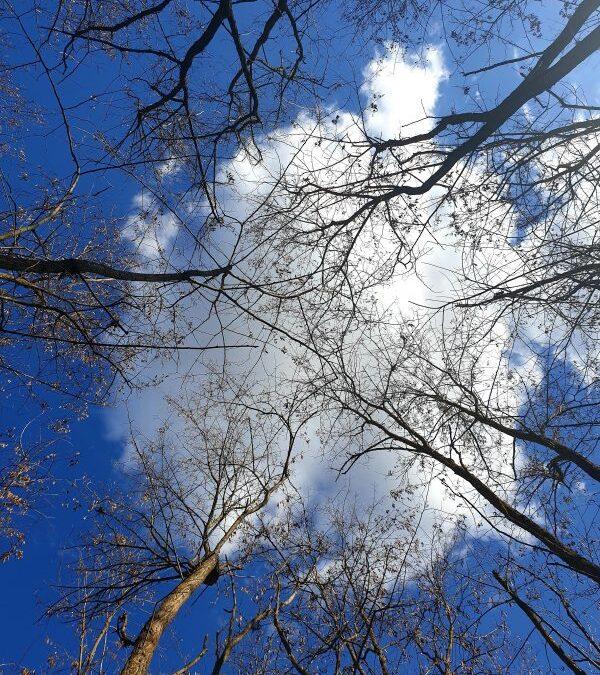 Privește cerul (fotografia zilei)