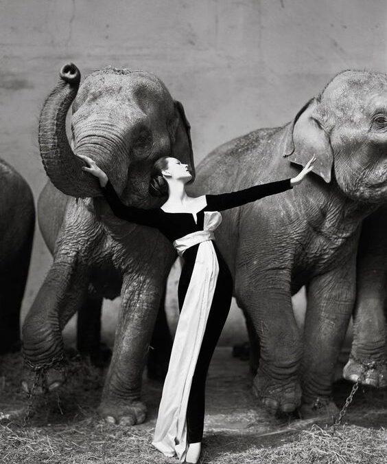 """""""Dovima with elephants"""" – Richard Avedon"""