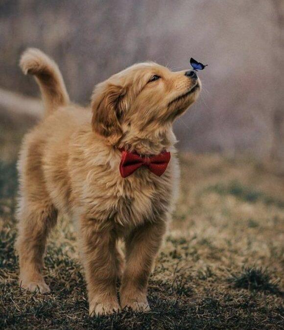 """""""Dacă Dumnezeu ar fi avut nevoie să fie adorat, el n-ar fi creat decât câinii."""" – 23 Martie: """"Puppy Day"""""""