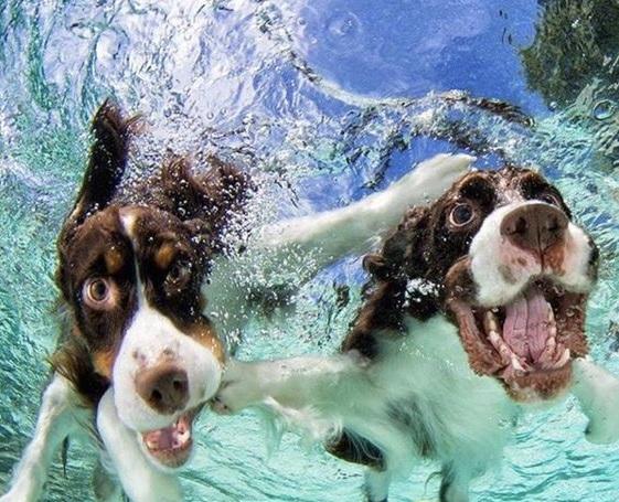 Câinii de apă