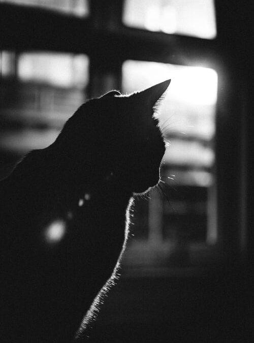 Casa cu pisici – Miruna-Maria Miron